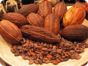 Фрукты: плоды какао дерева